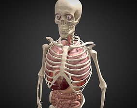 3D model Animated human body anatomy