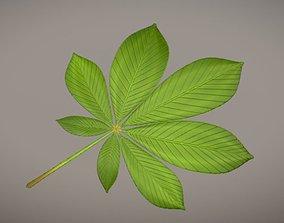 3D model Chestnut Leaf Low-Poly