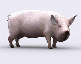animated realtime 3DRT - Pig