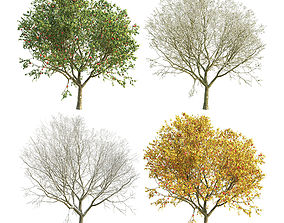 3D model Apple Tree 4 Seasons