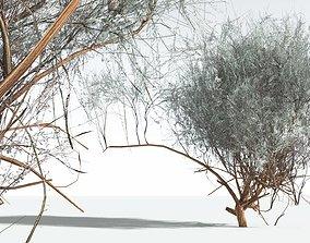 EVERYPlant Big Sagebrush LowPoly 12 --10 Models-- 3D asset