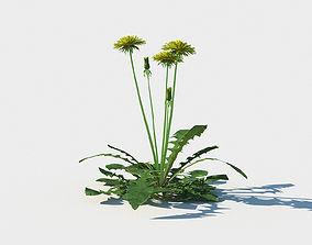 Dandelion collection 3D model