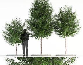 Plants collection 83 3D model