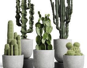 collection indoor plant 62 concrete vase cactus pot 3D