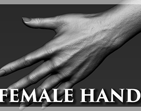 3D Female Hand Realistic