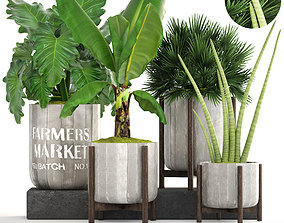 Collection of plants 3D tropical