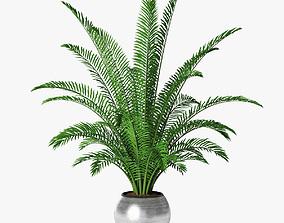3D model palm 09