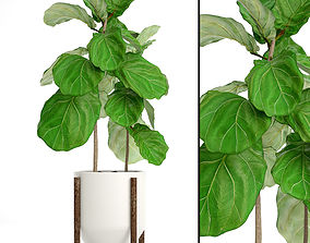 3D model leaf Ficus Lyrata Trees