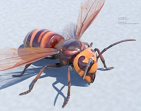 Murder Giant Asian Hornet 3D model