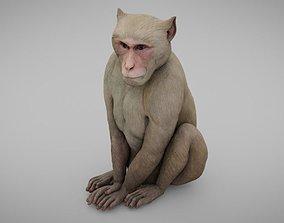 Monkey 3D asset low-poly