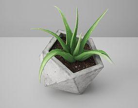 3D Icosaeder Concrete Potted Cactus