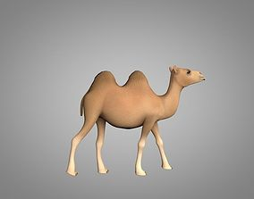 Camel 3D model animated