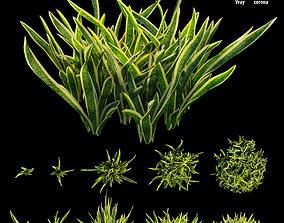 Sansevieria Artificial Snake Plant 3D model
