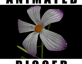 3D Dianthus Recognitus