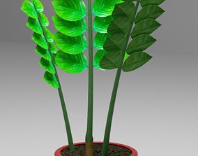 Zamioculcas flowerpot dollar tree 3D