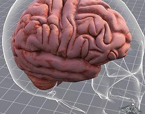 3D model maya Nervous System