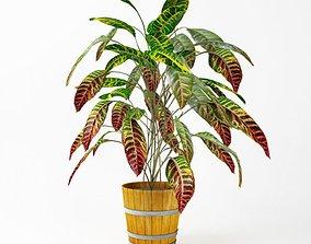 Leaf Pot Plant 3D
