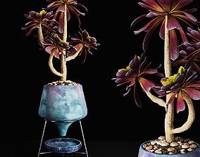 Plant 18 3D plant