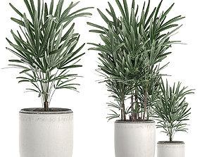 Decorative palm in a white flowerpot 521 3D