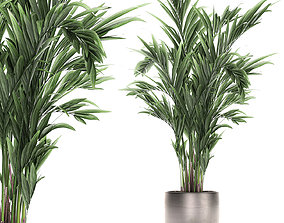 Decorative palm in a flowerpot 693 3D