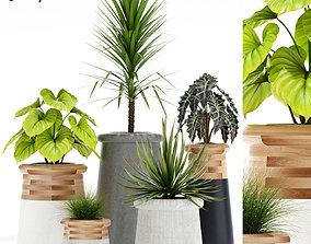 Plants collection 131 indigenus soma 3D model