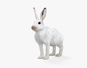 3D model Arctic Hare HD