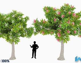 3D model Small Tree Optimized