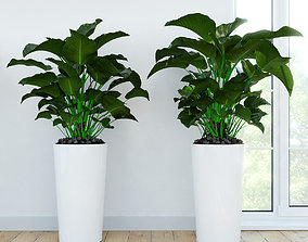 Philodendron Congo 3D