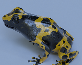 Yellow banded Bumblebee poison dart frog Dendrobates 3D