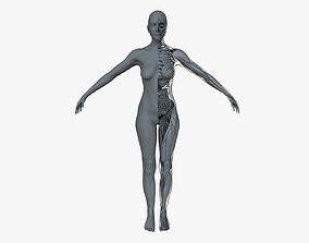 3D model Ultimate Female Anatomy Project