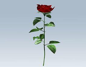 Red rose 3D asset