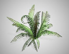 3D model Cinnamon Fern bush