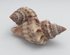 Seashell 3D