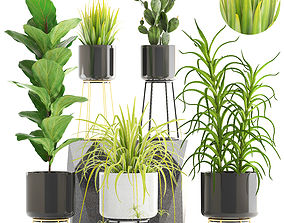 Collection of plants west 3D model