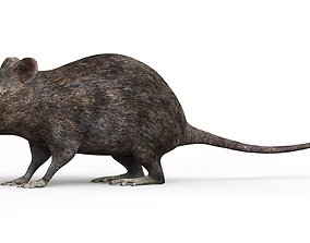 3D asset Mouse With PBR Textures