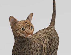 rigged 3D Cat Rigged model game ready