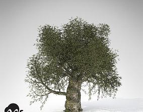 3D model XfrogPlants Olive