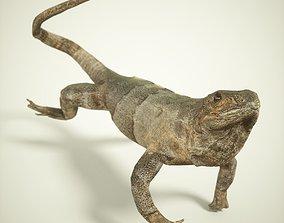 3D asset Salamander Lizard Photorealistic Posed