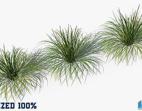 3D model Muhlenbergia Rigens Bush Optimized