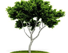 Green Leaf Tree 3D model exterior