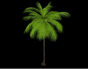 landscape Palm tree 3D model rigged