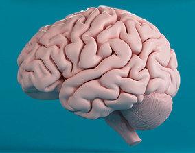 3D human nervous Brain