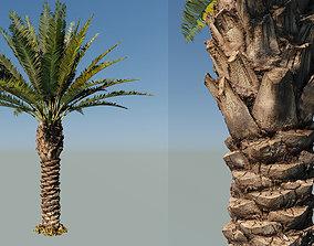 3D Palm tree type7 - A22