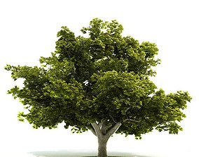 Mature Very Leafy Tree 3D model