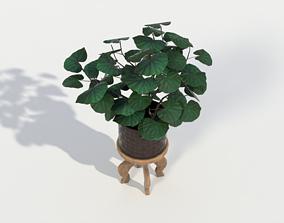 3D asset Potted plant