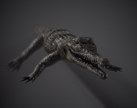 3D model PBR Lowpoly Realistic Crocodile optimized for