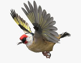3D European Goldfinch - rigged - animated
