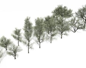 Spring and Summer trees 3D model