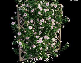 3D model Rose plant set 13 organics