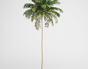 CGAxis Areca Palm 01 3D model